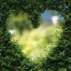 Quien busca el amor lo encuentra